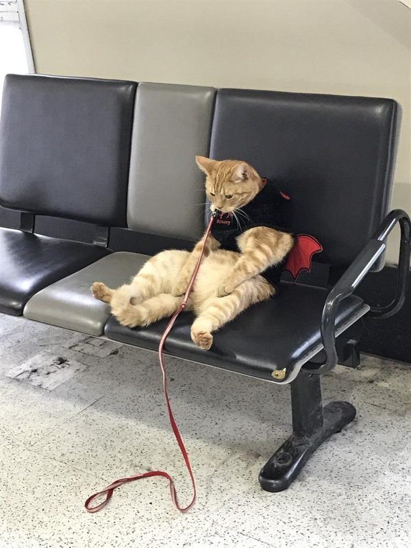 【猫おもしろ画像】駅のベンチに座るおじさんみたいな疲れた様子の猫がおもしろい(笑)