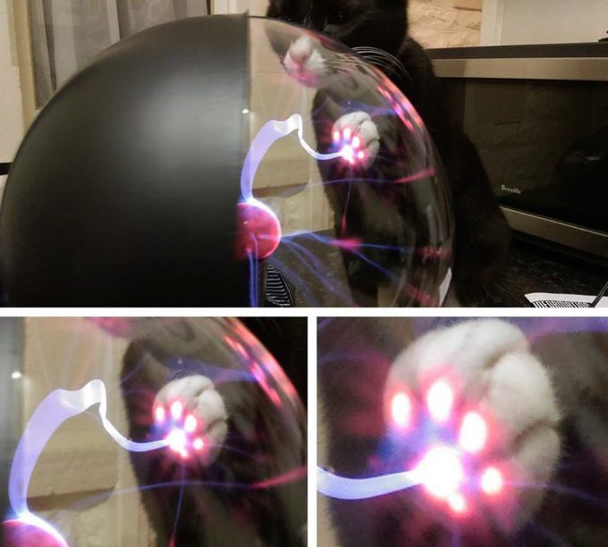 ネコパワー! プラスマボールに猫が触ると、意外な所からプラズマが発生(笑)cat_0057