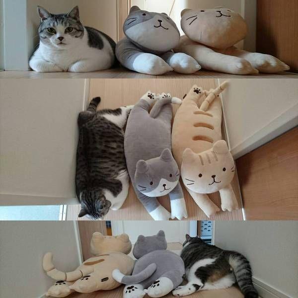 3兄弟? ぬいぐるみと同じ体勢をするデブ猫(笑)cat_0058
