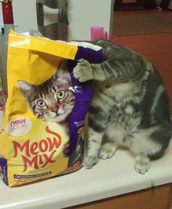 一致! キャットフードのパッケージと一体化した猫(笑)cat_0060