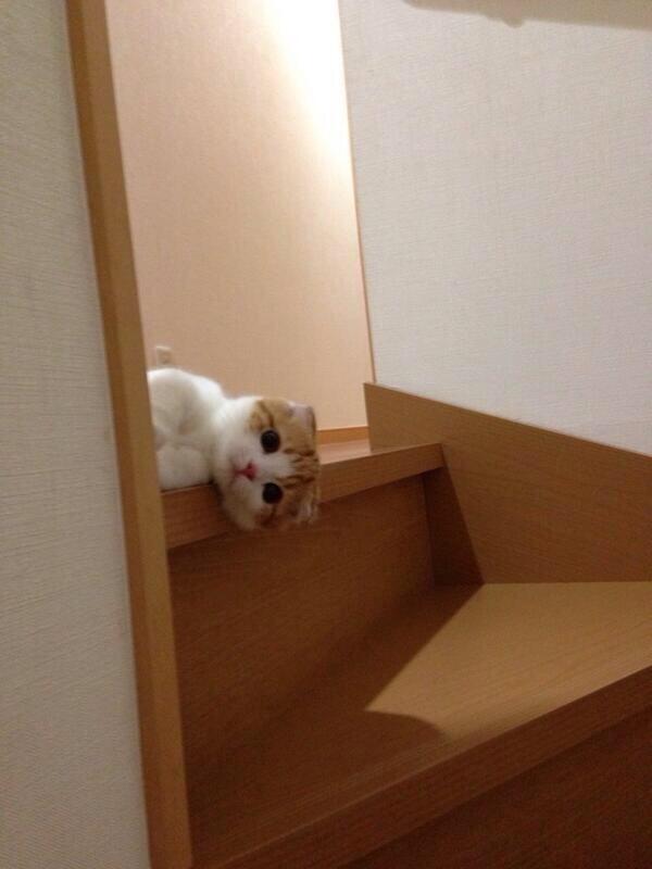 呼んだ? 階段の上から覗き込む子猫のかわいさに倒れそう(笑)cat_0061