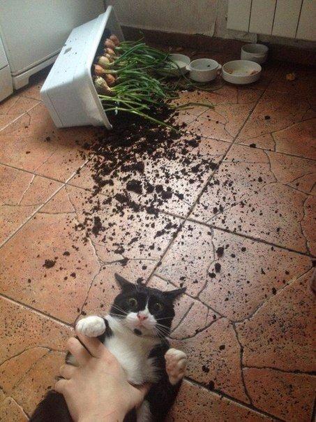こら! 植木を倒して怒られるのが分かったのか、瞳孔を開いてびっくりする猫(笑)