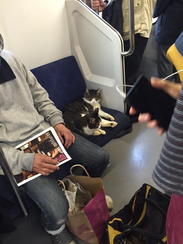 特等席! 電車内で一番いい席で気持ちよさそうに眠るカップル(笑)cat_0063