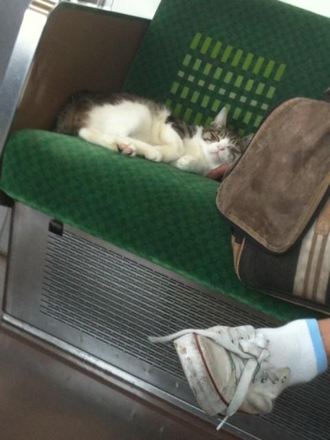 【猫おもしろ画像】電車内で気持ちよさそうに眠るネコを発見(笑)cat_0064