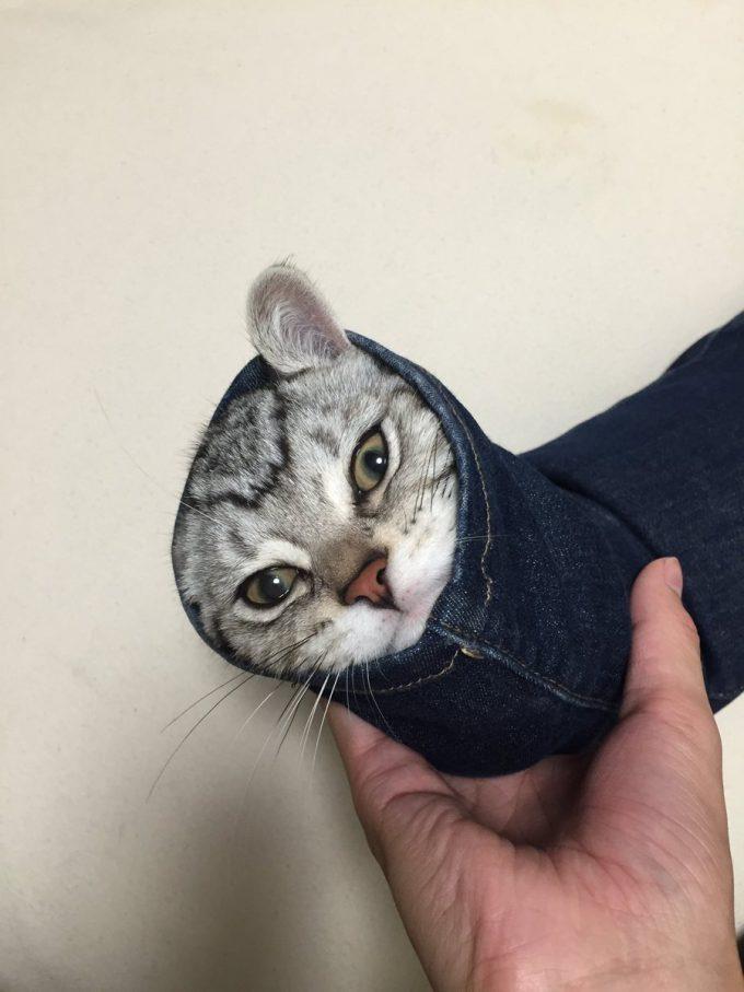 【猫おもしろ画像】出れない! スキニージーンズに詰まって絶望しているアメショー子猫が面白かわいい(笑)cat_0067_01