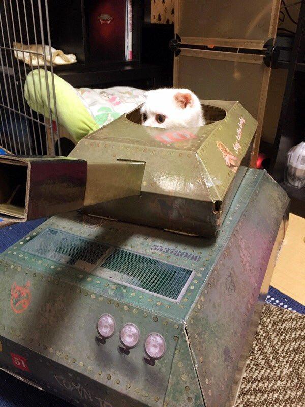 とつげきー! ロンドンの猫用戦車に乗車したネコ司令官(笑)cat_0068_02