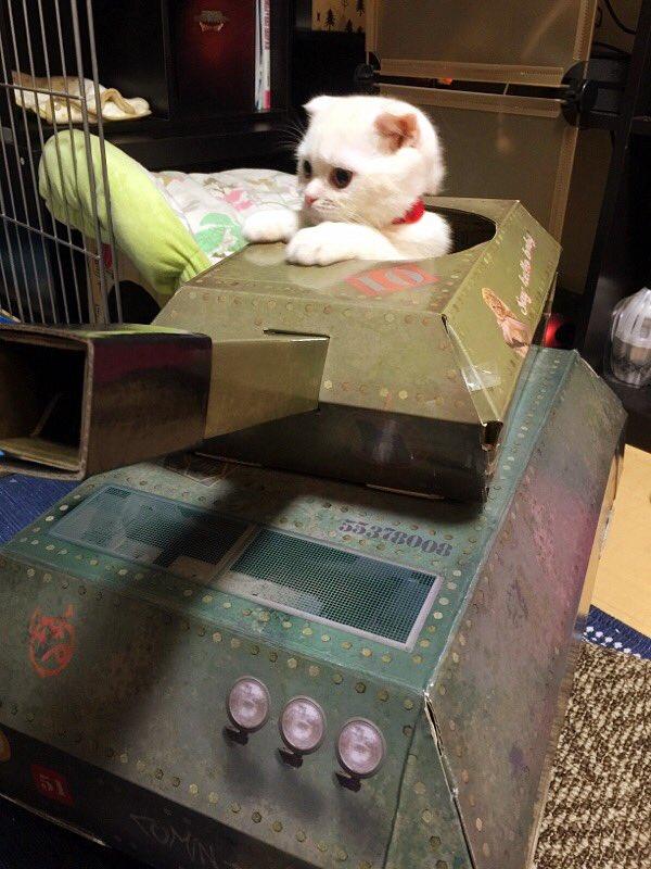 とつげきー! ロンドンの猫用戦車に乗車したネコ司令官(笑)cat_0068_03