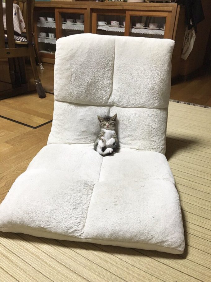 スヤスヤ! 体に見合わないサイズの座椅子に埋もれるように眠る子猫がヤバかわいい(笑)cat_0070