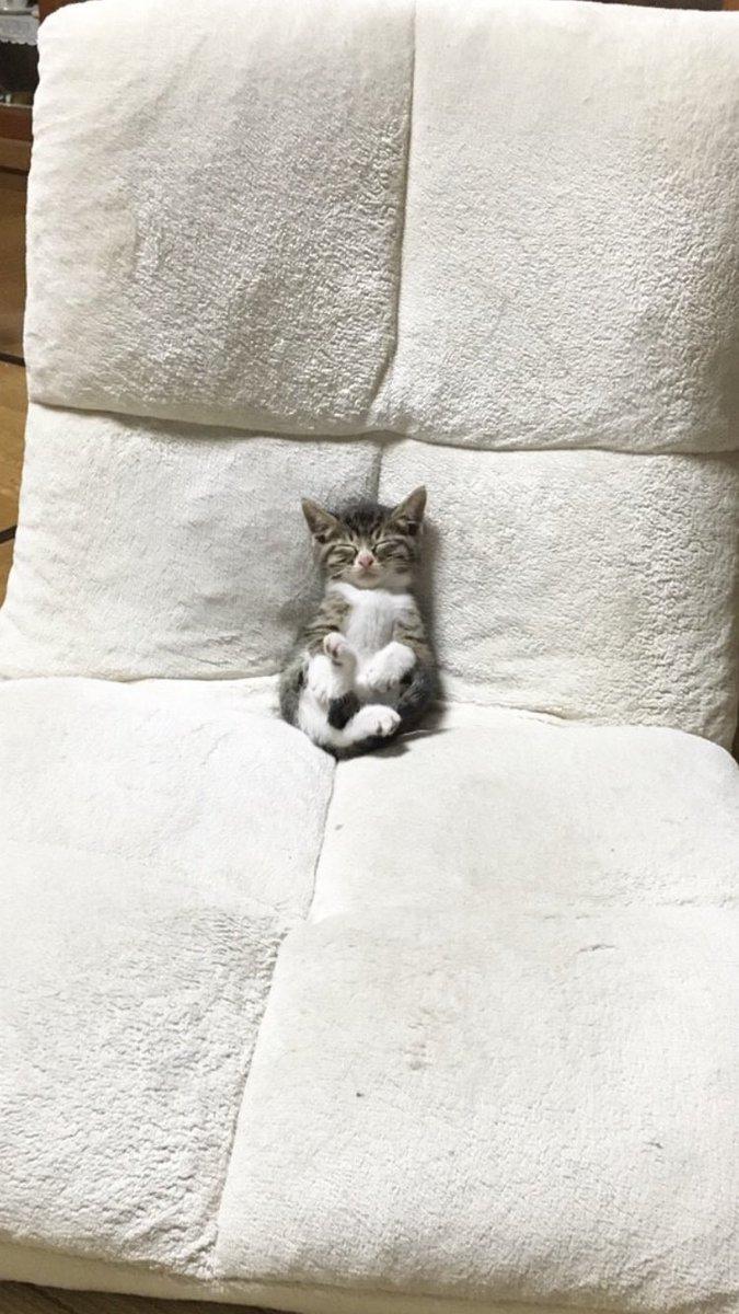 スヤスヤ! 体に見合わないサイズの座椅子に埋もれるように眠る子猫がヤバかわいい(笑)cat_0070_01