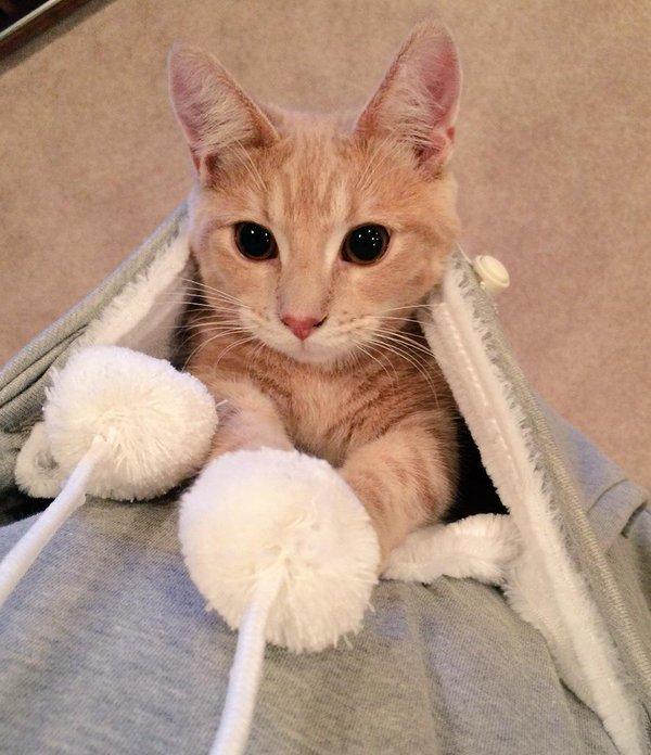 【猫おもしろ画像】ずっと一緒! どんな時もかわいい猫がすぐ見れる「にゃんガルーパーカー」の破壊力(笑)