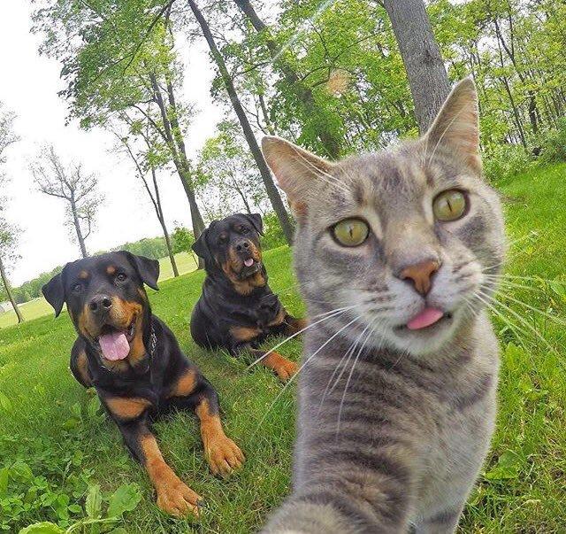 【猫おもしろ画像】賢すぎる! カメラを使って自撮りする猫(笑)cat_0045_01