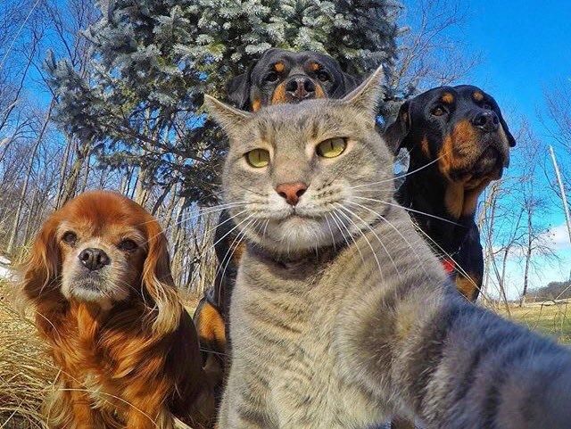 賢すぎる! カメラを使って自撮りする猫(笑)cat_0045_02