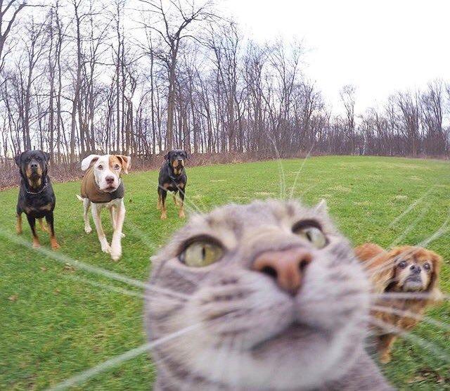 【猫おもしろ画像】賢すぎる! カメラを使って自撮りする猫(笑)cat_0045_03