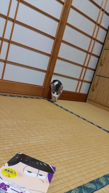 ひょこ! 悪びれることなく、キレイな障子を突き破って顔を出すネコ(笑)cat_0053_02