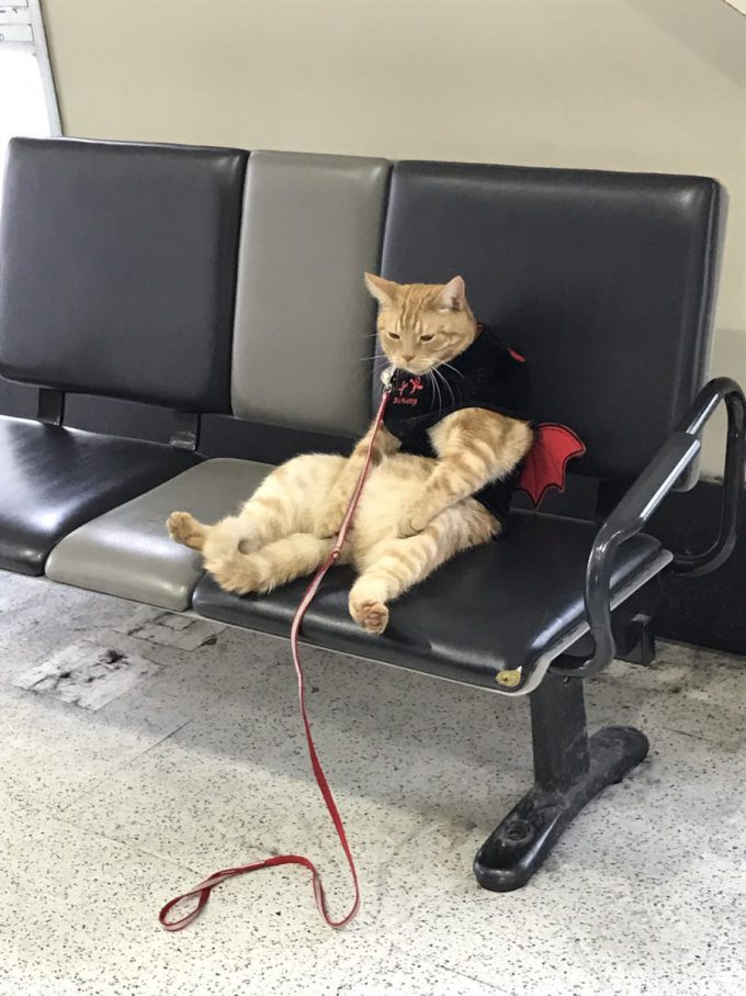 ふぅ… 駅で見かけたオッサンみたいな猫がシュール(笑)cat_0056_01