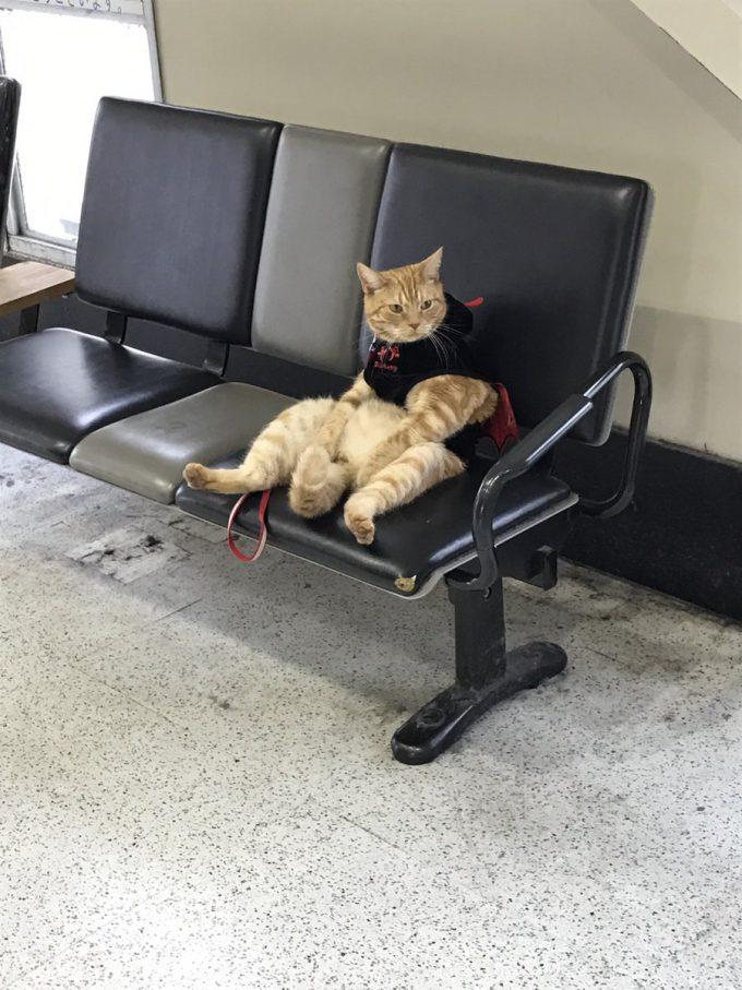 ふぅ… 駅で見かけたオッサンみたいな猫がシュール(笑)cat_0056_02