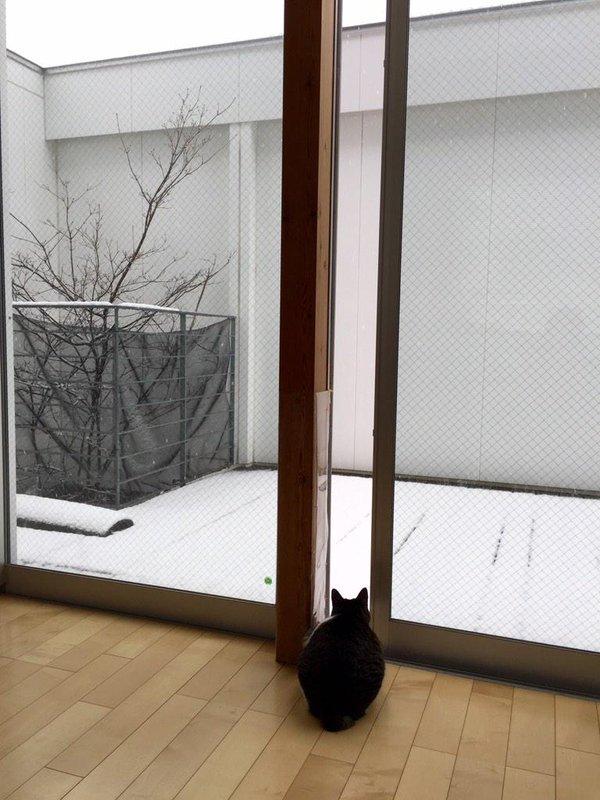 見たい寒い! 珍しい雪に興味津々なネコ様がとった行動がわがまますぎです(笑)cat_0072_02