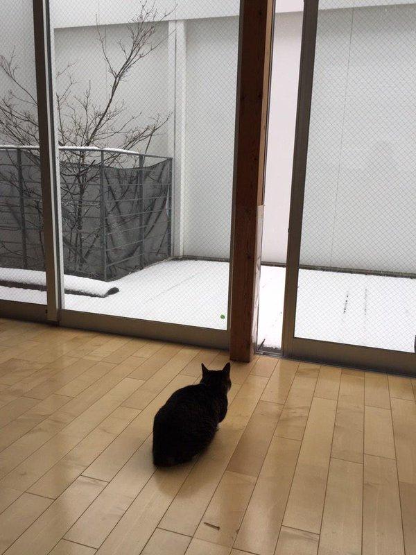 見たい寒い! 珍しい雪に興味津々なネコ様がとった行動がわがまますぎです(笑)cat_0072_03