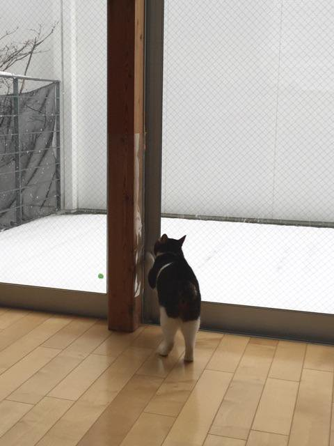 見たい寒い! 珍しい雪に興味津々なネコ様がとった行動がわがまますぎです(笑)cat_0072_04
