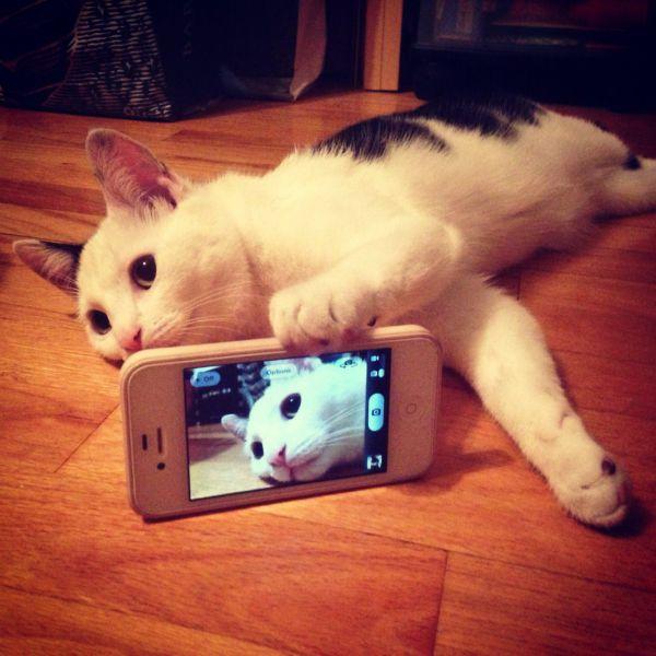 この角度! iPhoneで自撮りしようとするネコ(笑)cat_0074