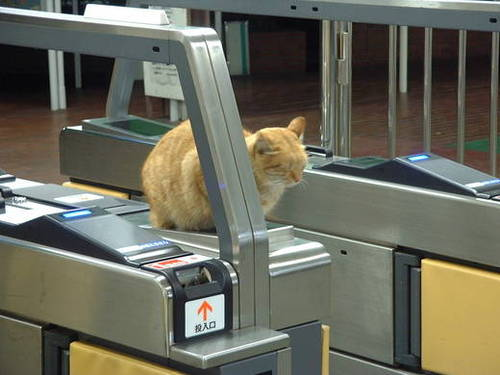暖かい! 駅の自動改札機の上で暖をとりながらぐっすり眠る猫(笑)cat_0076