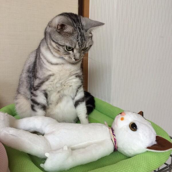 やらかしたー! 目が覚めたら隣に知らない女がいて硬直するネコ(笑)cat_0077