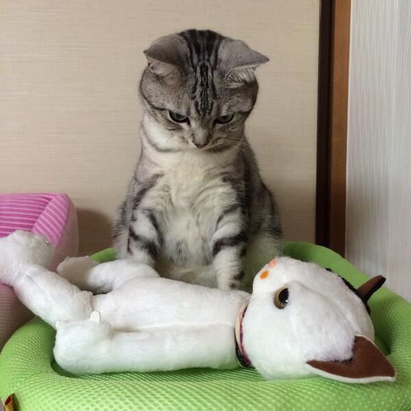 やらかしたー! 目が覚めたら隣に知らない女がいて硬直するネコ(笑)cat_0077_01