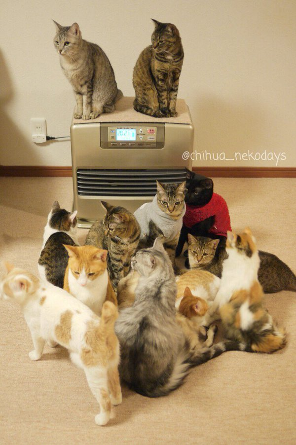 【猫おもしろ画像】魔法の機械! 寒い時期にストーブを付けた時の猫の集まり方が異常(笑)