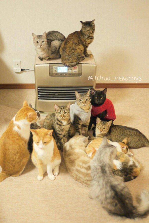 魔法の機械! 寒い時期にストーブを付けた時の猫の集まり方が異常(笑)