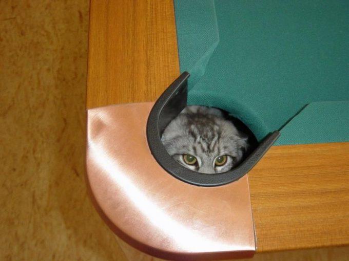 【猫おもしろ画像】ビリヤード台の意外な場所に隠れるおもしろい猫(笑)