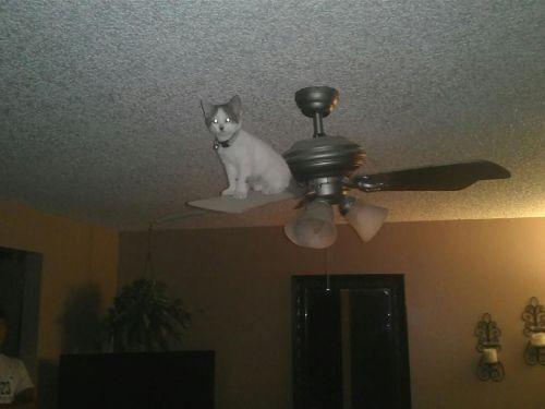 マジック! どうやってこんな場所に来れたのか謎すぎる猫(笑)cat_0081