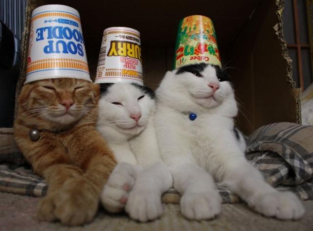 仲良し! 似たような容器を頭に被って仲がよさそうなネコちゃんたち(笑)cat_0083