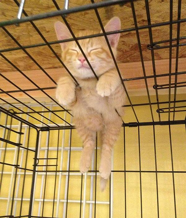 どこでも寝れるよ! カゴの上で気持ちよさそうに眠る子ネコの姿勢が面白い(笑)cat_0085