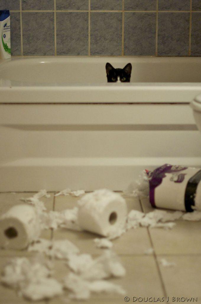 お前か! トイレットペーパーで遊んだ犯人猫、叱られるのが怖くてバスタブからこっそり顔を出す(笑)