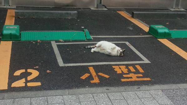 【猫おもしろ画像】野良猫がごろごろしている駐車場のとあるスペース(笑)cat_0088