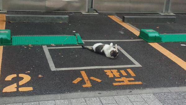 車? 野良猫がごろごろしている駐車場のとあるスペース(笑)cat_0088_01