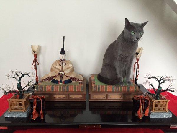 お前じゃない! ロシアンブルーのようなお雛様が座っているひな人形(笑)cat_0090