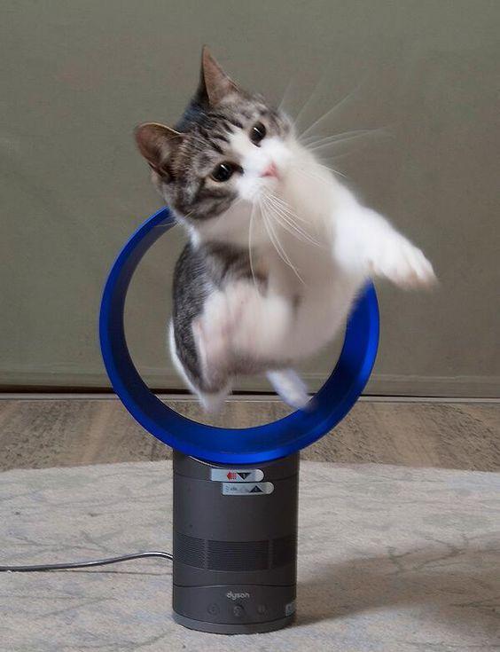 【ダイソン扇風機と猫おもしろ画像】サーカス! ダイソンの羽根なし扇風機で遊ぶネコの躍動感(笑)cat_0091