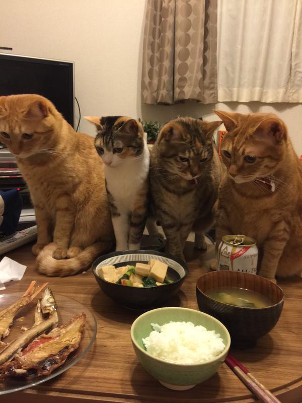 近い近い! 干物を焼いた時のネコたちの距離感(笑)cat_0092