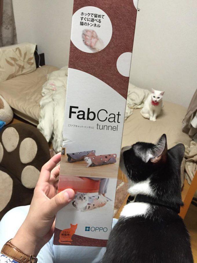 そっちかい! 猫たちのために買ってきた「ファブキャット・トンネル」の末路(笑)cat_0094