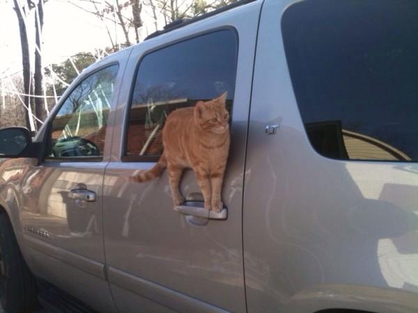 【猫おもしろ画像】自動車のある部分に立つ猫(笑)cat_0095
