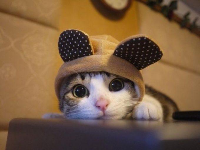 キュン死! 被り物をした子猫のあまりの可愛さに倒れそう(笑)cat_0096