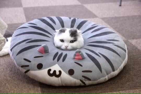 【猫おもしろ画像】ドーナツクッションにすっぽりとハマるおもしろい猫(笑)