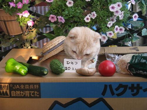 買います! ダンボールを陳列棚にして野菜を売る猫がかわいすぎて反則(笑)