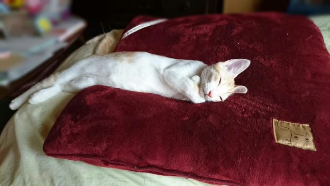 生まれ変わり? 友達の猫の寝姿がすごくファラオ(笑)cat_0100_01