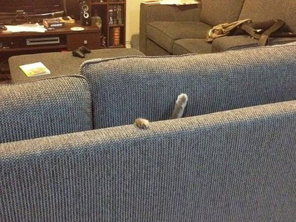 【猫おもしろ画像】助けてー! ソファーの間に落ちた猫、必死のヘルプ(笑)