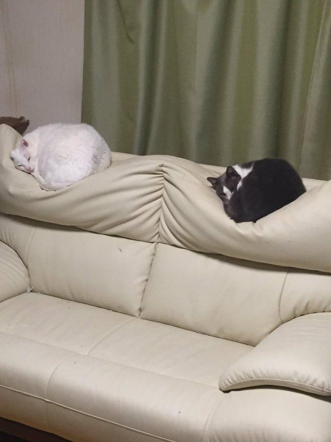 なぜ? 家のソファーが凹んだ形になってしまった原因(笑)cat_0104_01