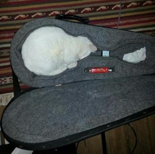 なにこれ? 楽器ケースで眠るネコが凄すぎて思わず二度見します(笑)cat_0105