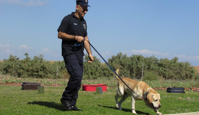 警察犬animal_0004_01