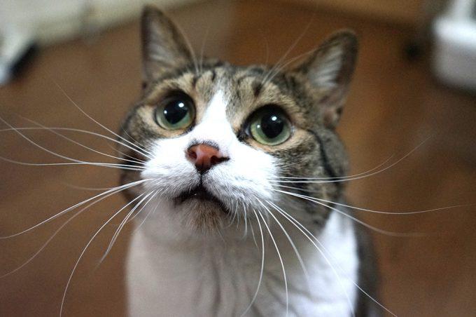 【猫おもしろ画像】ぽんたー! 鴻池剛さんが描くネコ漫画が飽きないほどにおもしろすぎます(笑)